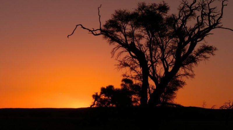 Atarceder en Namibia