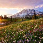 pradera de flores de alta montaña con la luz del sol de atardecer