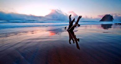 Nubes sobre la playa vespertina. Tronco con forma de tridente clavado en la arena, se aprecian los reflejos del sol del ocaso y de las nubes sobre la arena mojada