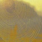 contornos luminosos de tela de araña