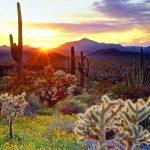 Ocaso en desierto de cactus y flores - Fuente: laba.ws