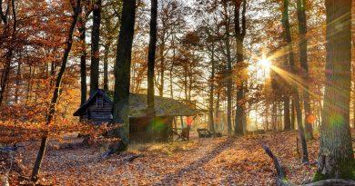 Casa en bosque despejado de otoño. La luz del sol ilumina el lecho de hojarasca