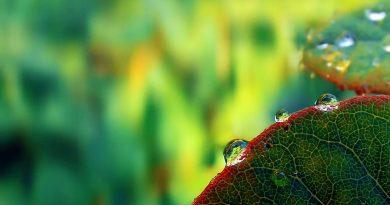Gotas sobre contorno de hoja