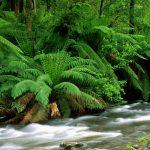 Cauce de río atravesando un bosque de helechos
