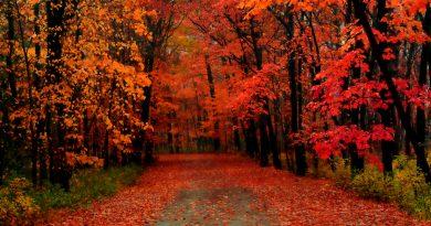 Bosque rojo, manto de hojas sobre el camino, despertando a la vida