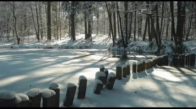 Lago helado en el bosque y línea de estacas