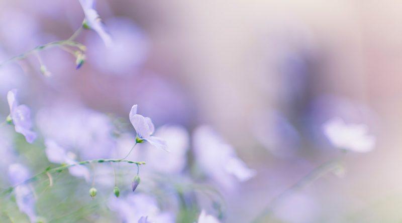 Flores difuminadas en lila