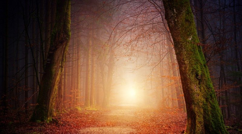 Naturaleza 3151869 (Fuente: pixabay.com - jplenio)