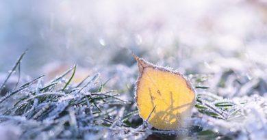 Hoja dorada y hierba bajo la escarcha
