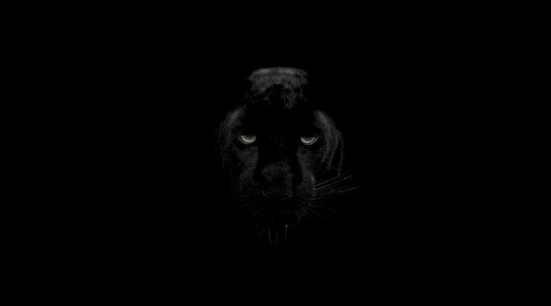 Pantera negra (fuente: Pixabay.com)