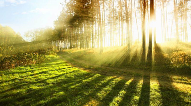 Resplandor del sol a tráves del bosque