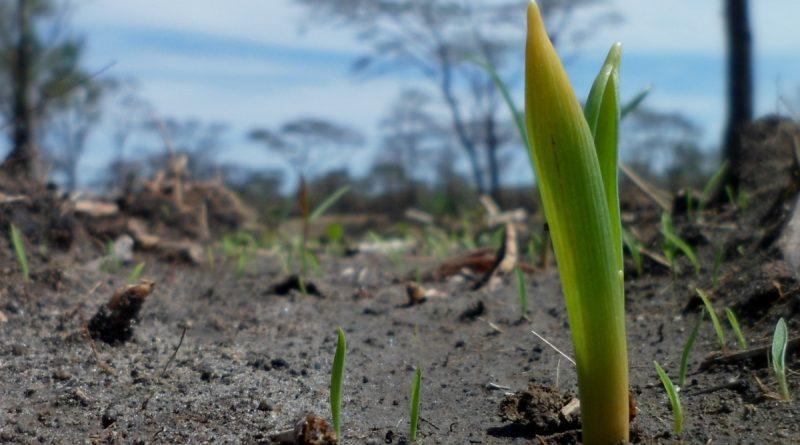 Germinación de planta en suelo yermo, abonado