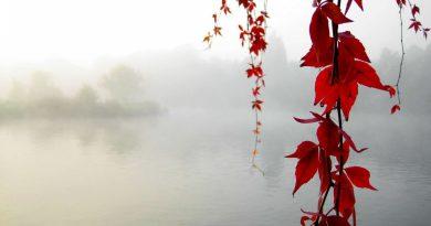Ramas de hojas rojas entre la niebla