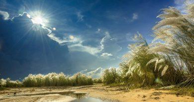 Orilla de cañas, charcos de mar y sol de lluvia resplandeciente