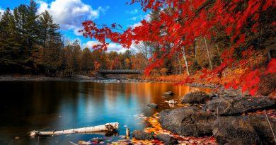 Árbol de hojas rojas - lago de otoño