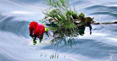 Rosa sobre agua de mar