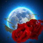 Rosas y luna llena