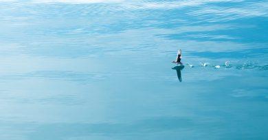 Remontando... (saltos de ave sobre el agua)