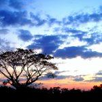 Silueta de árbol al amanecer