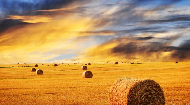 Tiempo de cosecha. Rollos de paja en un vasto campo entre la cálida luz del atardecer
