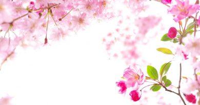 Floración rosa (Fuente: gde-Fon.com)